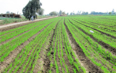 Gov't reiterates intentions to prop up irrigation farming.